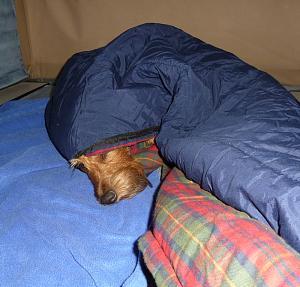 OK but where are you sleeping.jpg