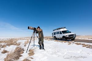 _DSC1782 Observing the snow geese (Chen caerulescens) migration, Montana, USA.jpg