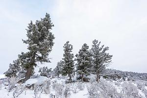 _DSC5913 Trees in snow, Wyoming, USA-2.jpg