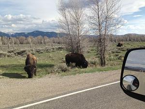 IMG_0633 buffalo.jpg