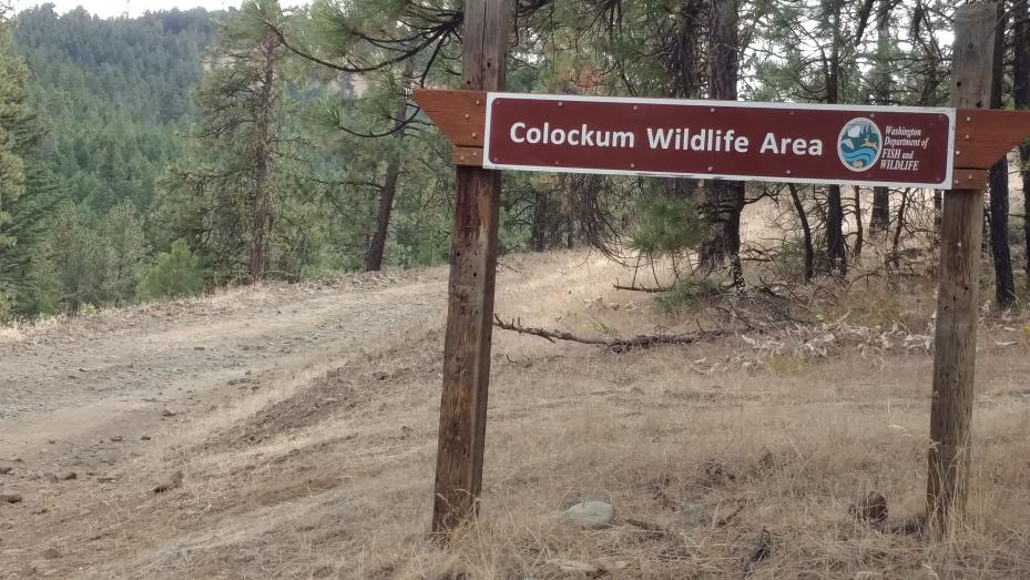 North entrance of Colockum Wildlife Area, primarily used by hunters ... but also by mountain bikers, ATV-ers and wildflower types like myself.  The Colockum Wildlife Area was purchased by the Washington State Department of Game in the mid-1950's from several landowners, including the Arthur Coffin family. Funding for the purchase came from the Federal Aid in Wildlife Restoration Program. The purpose of these acquisitions was to expand the winter range for the Colockum deer and elk herds, and to perpetuate and improve the upland game bird habitat.
