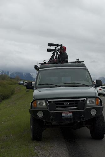 Photographing Bear 610 and her cubs after an elk kill along the Snake River, Tetons.