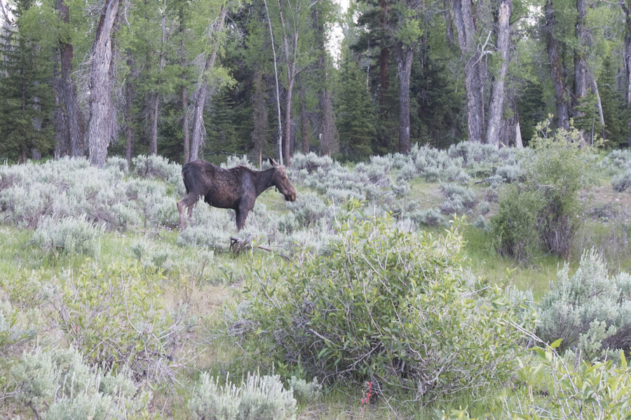 Visitor to our camp site during the Teton Meet Up