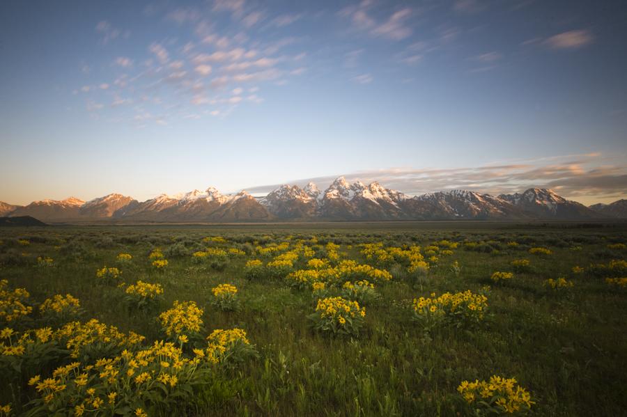 Early morning in June near Antelope Flats, Grand Teton National Park.