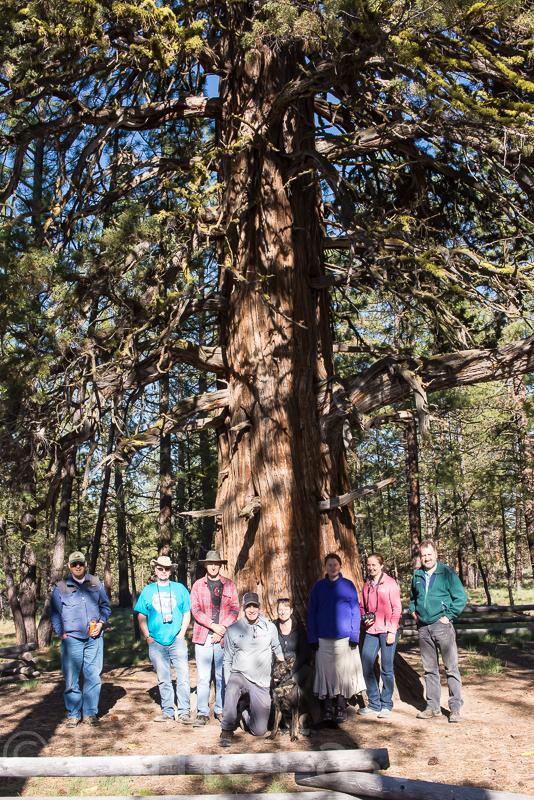 Largest Juniper Tree in Oregon
