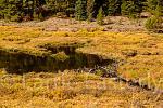 Beaver lodge and dam