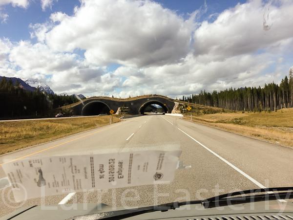 Animal bridge over Alberta highway 93