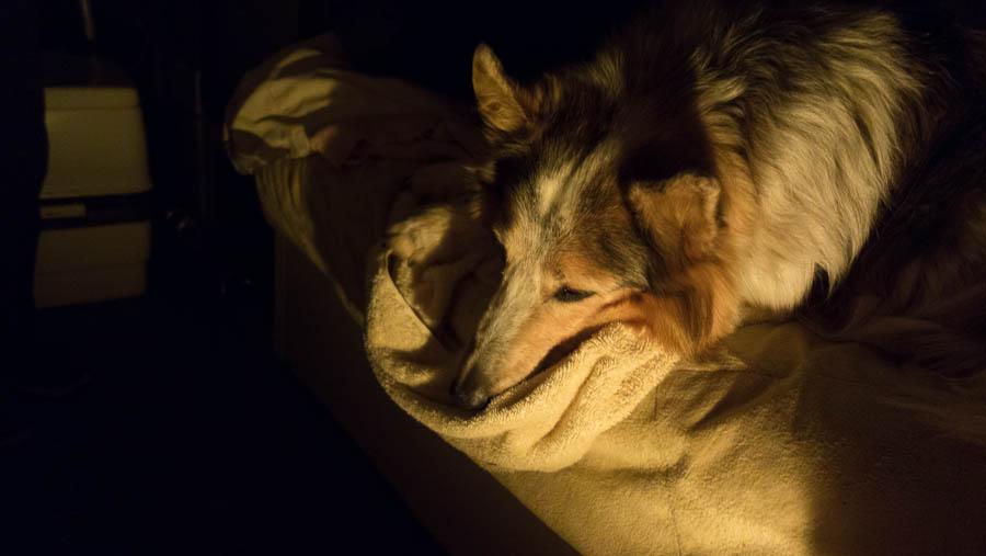 She sleeps more now