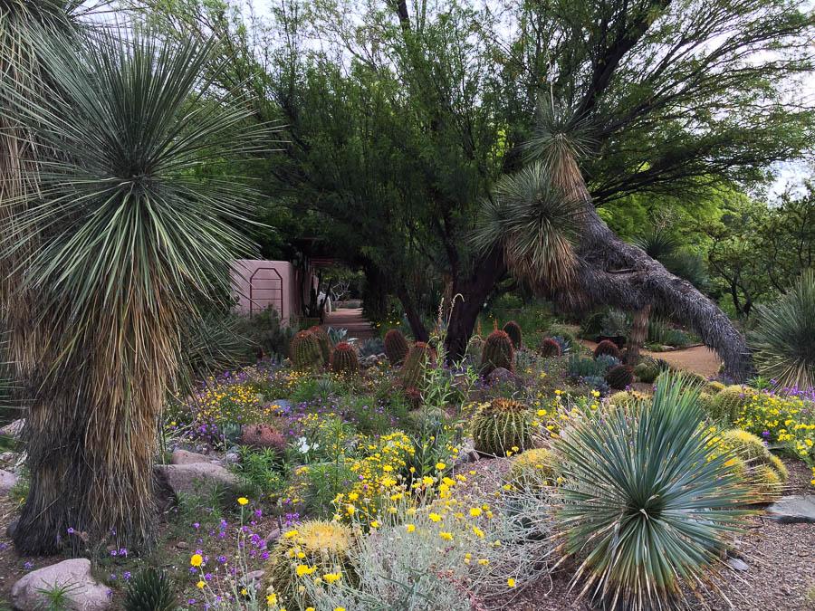 Boyce Thompson Arboretum, Superior, AZ