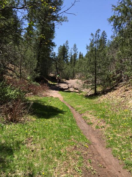 Quaking Aspen Trail, Zuni MTB