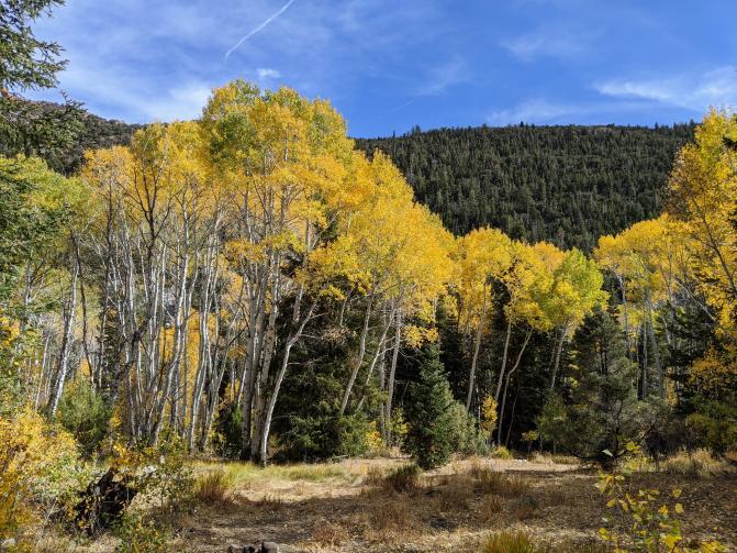 Great Basin NP Aspins