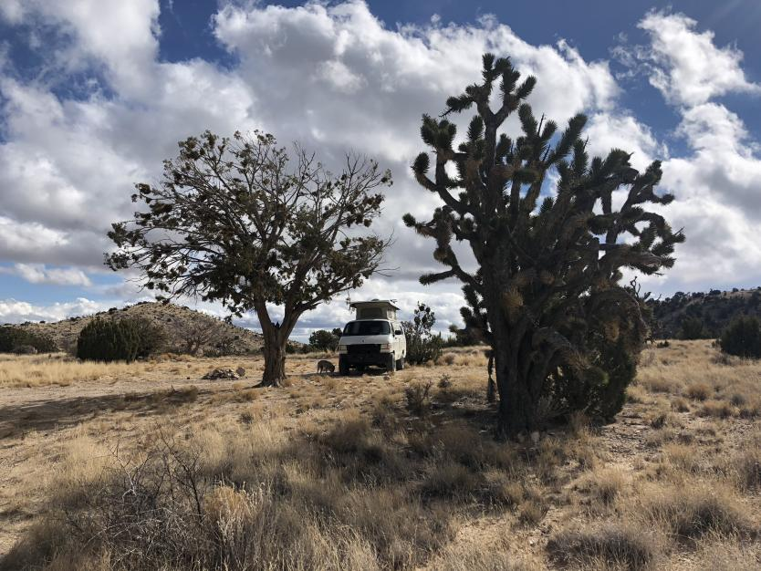 Mojave Preserve Thanksgiving 2018